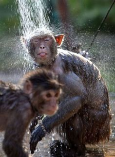 Monkey Shower, awww and the older one's got bling!!