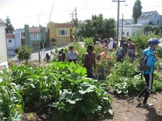 urban agriculture in cuba photo essay north american congress on latin america bring the. Black Bedroom Furniture Sets. Home Design Ideas