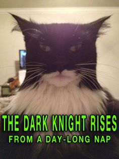 Funny Cat Memes The Dark Night Rises funny pictures dumb crazy people ...