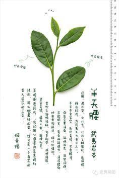 #半天腰 #武夷岩茶 #wuyi #cliff #tea #bantianyao
