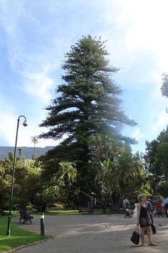 company's garden - o que fazer em cape town - africa do sul