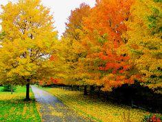 #scenery #nature #travel #beautiful