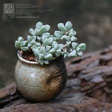 Image result for vaso bonsai ceramica