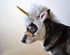 Unicorn-Dog already knows how awesome she is.