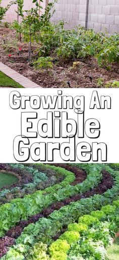 Even if you're extremely busy or restricted to indoor spaces, you can achieve the benefits of edible gardening. It's a low-cost, low-impact hobby and you can invest as much or as little effort into it as you'd like. Beginner gardeners can start with indoo