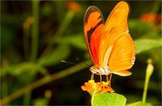 Papillons Sanguinet