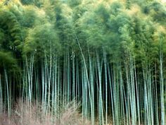 77 Best Bamboo Images Nature Bamboo Bamboo Garden