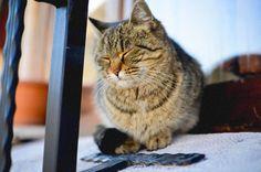 イスタンブールの猫たち A cat in Istanbul