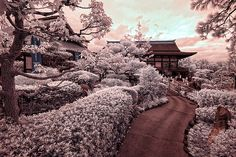 amazing Japanese landscape