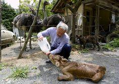 O homem que se recusou a abandonar os animais de Fukushima