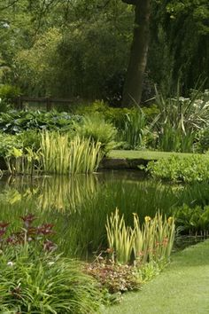 Great garden area with pond.....