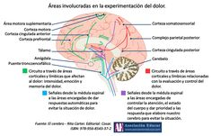 Ilustración de uso libre, sólo se pide citar la fuente (Asociación Educar). VERDE: Circuito a través de áreas corticales y límbicas que afectan al dolor: intensidad, emoción y memoria del dolor. CELESTE: Señales desde la médula espinal a las áreas encargadas de dar respuestas automáticas para evitar la situación de dolor. ROJO: Circuito a través de áreas corticales y límbicas relacionadas con la evaluación y control del dolor.