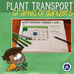 Leaf and chloroplast crossword with diagram editable my transport in plants graphic organizers ccuart Image collections