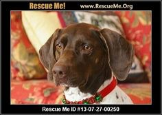 — Washington German Shorthaired Pointer Rescue — ADOPTIONS — RescueMe.Org