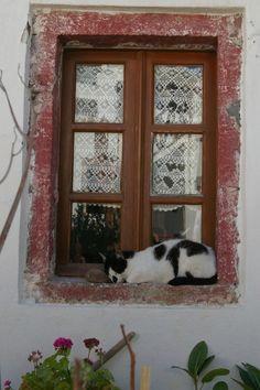 Window Cat, Santorini by Peter Kafer