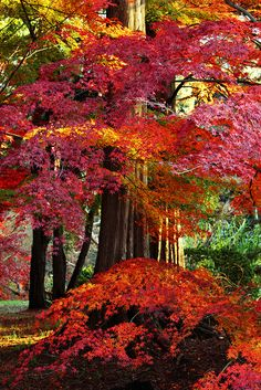 Beautiful autumn color Autumn Serenity In Portland Japanese Gardens Autumn leaves-nature in all her beauty Beautiful World, Beautiful Places, Magic Places, Autumn Scenes, Seasons Of The Year, Fall Pictures, Fall Pics, All Nature, Autumn Leaves