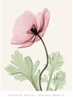 Steven NMeyers&花朵X光
