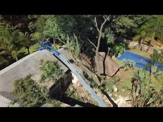 WhatsApp Video 2018 05 28 at 14 03 49 Tree Felling, Transportation, Cherry, Bed, Stream Bed, Beds, Cherries