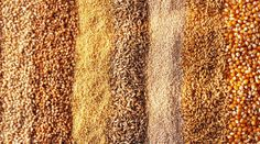 Amelia Freer on why cutting certain grains could help with weight loss ...