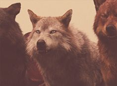 The wolves.