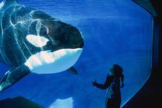 A bill passed in the state Assembly would prohibit the holding of killer whales except for 'educational' purposes. YET AGAIN,SEAWORLD IS OFF THE HOOK...