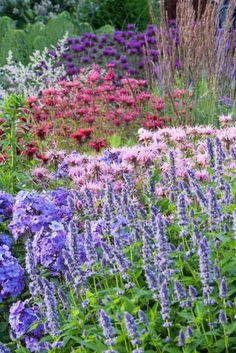 2,79 € pro St 3 x Lavandula angustifolia 'Rosea/' Lavendel
