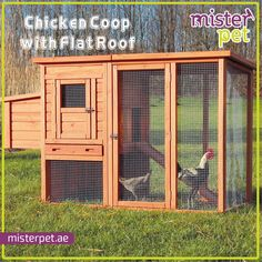 Chicken Coop with Flat Roof Duabi
