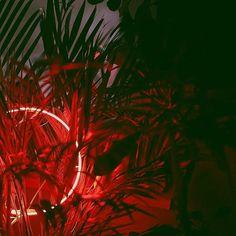 Neon on plants
