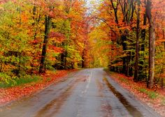 """Autumn Road"" by Pure Michigan on Flickr - This colorful photograph was taken on a back country road on Old Mission Penninsula in Traverse City, Michigan."
