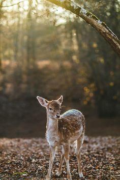 19 фотографий природы, заставляющих полюбить этот мир всем сердцем