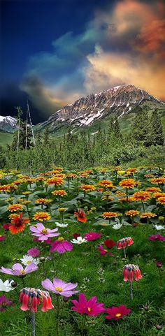 ~~flower fields and mountain landscape by peter holme iii~~ All Nature, Amazing Nature, Beautiful World, Beautiful Places, Beautiful Sky, Beautiful Scenery, Landscape Photography, Nature Photography, Photography Jobs
