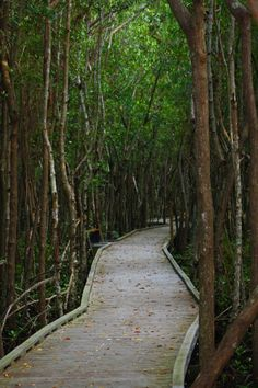 Mangrove Walkways in Cape Coral, Florida.  Shhhh don't tell ..it's peaceful without the anoqbirds