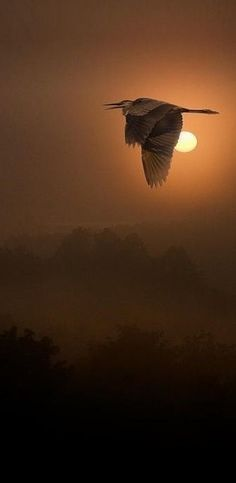 Flight of the settin mother nature moments