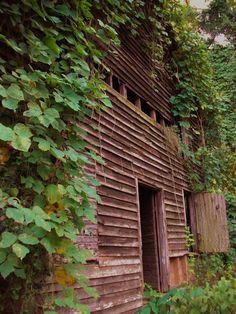 Old Barn with Sunset | Old Barn with Kudzu,