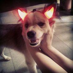 My evil dog