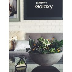 Samsung Galaxy Backstage artist lounge floral/succulents for Lollapalooza by Life in Bloom