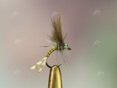 https://pescandoamosca.files.wordpress.com/2009/01/emergente-02.jpg
