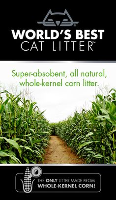 A cat litter that is environmentally friendly AND performs well. The secret is whole-kernel corn.