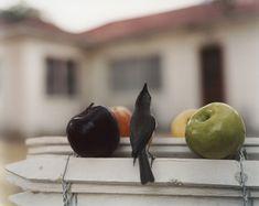 by Jean-Luc Mylayne