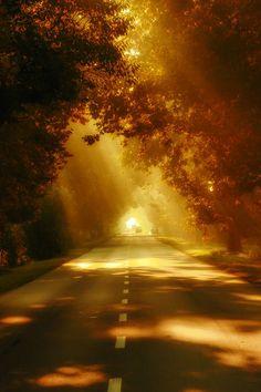 Autumn Road, Budapest, Hungary photo via karin Foto Nature, All Nature, Beautiful World, Beautiful Images, Beautiful Scenery, Belle Photo, Wonders Of The World, Around The Worlds, Photos
