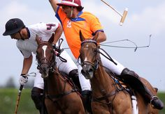 Polo Horse, Horses, Horse