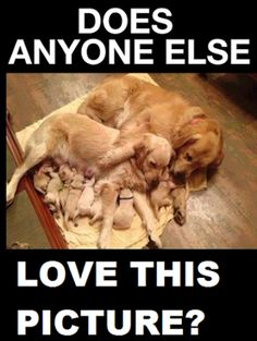 Dog Lovers - Google+