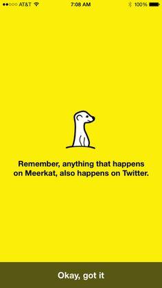 Meerkat Intro (4)