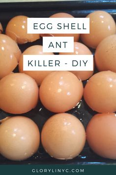 Fun Fact Tuesday! Crushed eggshells works as an organic pesticide to kill pests like ants, Japanese beetles and slugs. #PestControl See how here - http://glorylinyc.com/2016/05/04/diy-how-to-kill-ants-naturally-with-non-toxic-non-poisonous-egg-shells-ground-with-krupsorderdesc/#utm_sguid=100790,fd23d313-60ec-cead-59e1-4126d1de09af Thank us later or call us today!