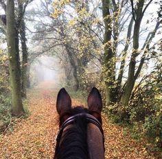 Cute Horses, Horse Love, Beautiful Horses, Horse Ears, Horse Training, Training Tips, Dressage Horses, English Riding, Trail Riding