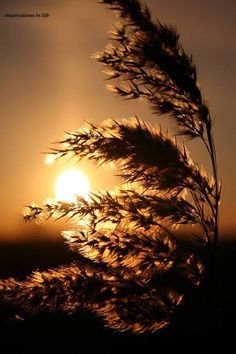 sun behind grasss Nature Pictures, Cool Pictures, Cool Photos, Beautiful Pictures, Beautiful Sunrise, Jolie Photo, Great Shots, Beautiful World, Mother Nature