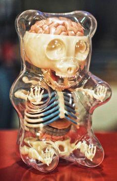 Anatomical gummy bear via twitter @DrAliceRoberts: