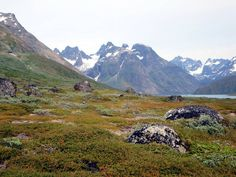 Colorful Arctic tundra blankets a slope off Tasermiut Fjord in Southern Greenland.