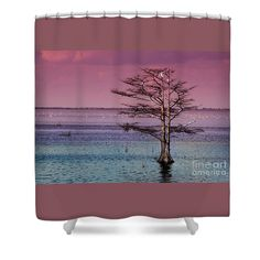 Cypress Shower Curtain featuring the photograph Cypress Purple Sky by Scott Hervieux