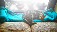 Many cats may wander around the entire home like it's their castle. But giving your cat a designated relaxation and play area can do wonders for both their physical and mental well being. Here is how to create the perfect kitty corner.
